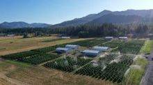 Halo Labs Provides Oregon Business Update Company Projects Record September Sales Orders in Oregon