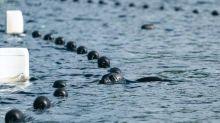La carrera por salvar a Eeva, la foca más amenazada del mundo