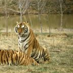 Judge in Oklahoma Rules 'Tiger King' Zoo Must Give Up Big Cats Due to Violations