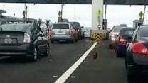 Fowl Play Reported With Chickens on Loose at Toll Plaza
