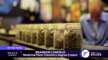Majoring in marijuana