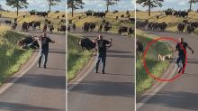 Woman's pants ripped off in wild buffalo attack in Custer State Park, South Dakota