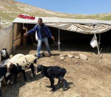 Isolation a double-edged sword for West Bank's Bedouin herders
