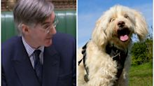Dog thieves will not get tougher sentences, Jacob Rees-Mogg says
