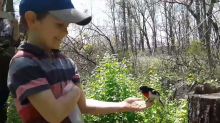 Man captures rare moment between son and bird that typically eats from bird feeders