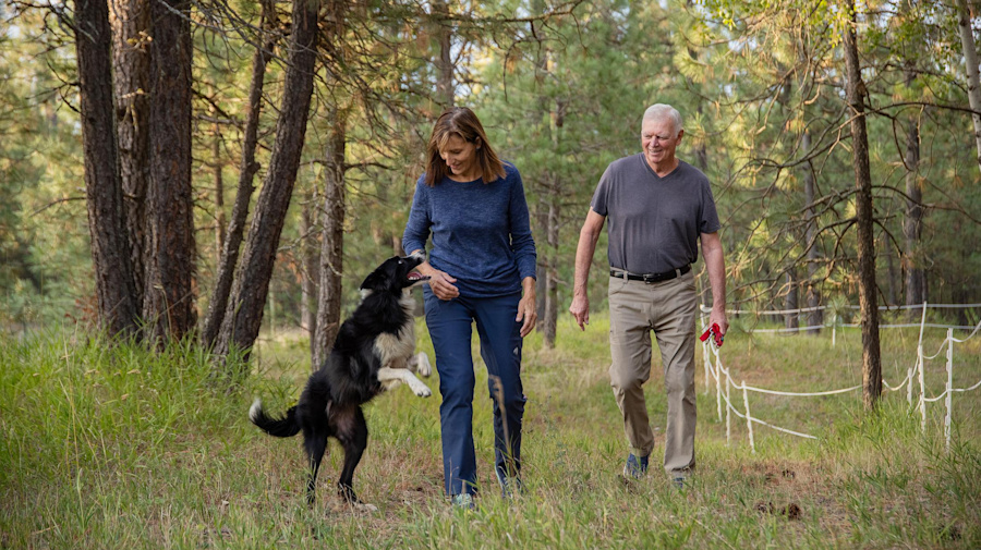 The 57-day search for Katie the border collie
