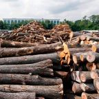 Lumber prices start to dip after reaching sky-high costs. Will they keep coming down?