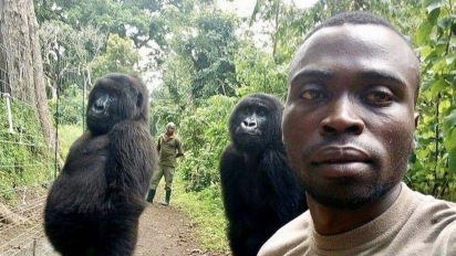 Camera-ready: Gorillas upstage caretaker in selfie