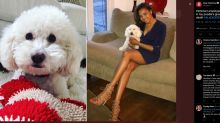 PetSmart workers charged after poodle dies during grooming visit in Pennsylvania