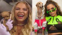Cadela de Luisa Sonza morde Luan Santana e avança em cão de Anitta