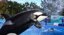 SeaWorld posts strong quarter, Ferrari is in high gear, Chevy's unique muscle car