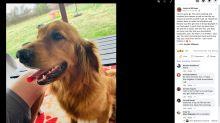 'Heard the gunshot.' Texas family says they saw dog killed while checking home camera