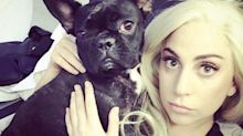 Like Lady Gaga, I know the heartbreak of dog theft