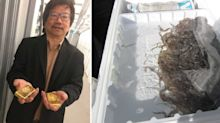 Seafood salesman who smuggled £53 million of live eels given two year suspended sentence