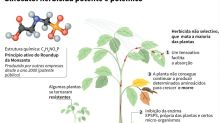 Glifosato, a poção milagrosa das grandes colheitas do Brasil