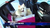 Does Your Dog Need a Car Seat?
