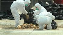 Bird flu prompts Hong Kong to cull 20,000 chickens