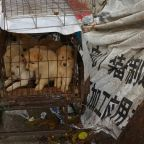 Rights group welcomes draft rules that could end China dog meat trade