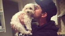 Taylor Lautner Mourns the Death of 13-Year-Old Dog Roxy: 'You Have Brought So Much Joy'