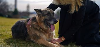Biden family dog Champ has died, White House says