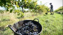 Australia uncorks wine war with Canada