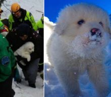 Puppies Rescued From Resort Hotel Buried by Avalanche: 'A Race Against Time'