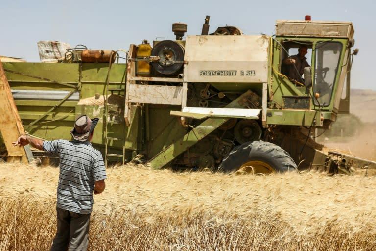 Farmers use a combine harvester in a wheat field in Al-Kaswa, south of Syria's capital Damascus (AFP Photo/LOUAI BESHARA)