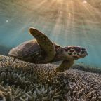 """Australia opposes UN report recommending Great Barrier Reef be listed as """"in danger"""""""