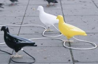 Pigeon transmits data faster than leading South African internet provider