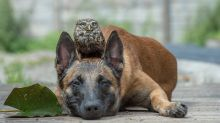 Meet the dog and owl duo that will melt your heart