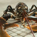 TSA Agents Found a Live, 20-Pound Lobster in Checked Luggage at Boston Airport