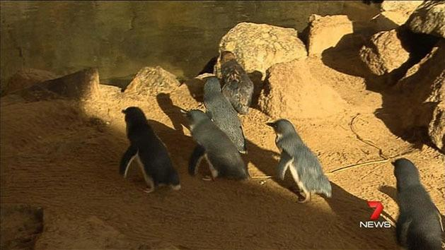 Feud over penguin funding
