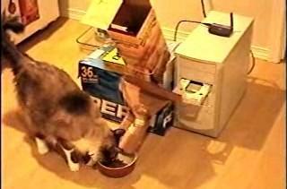 DIY cat feeder powered by Ubuntu Linux, CD-ROM tray