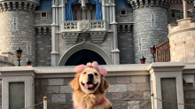 Service dog cuddles with Donald Duck at Disney World in adorable viral video