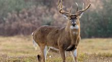 A 73-year-old in Colorado was fined more than $1,000 after her pet deer gored a woman walking her dog