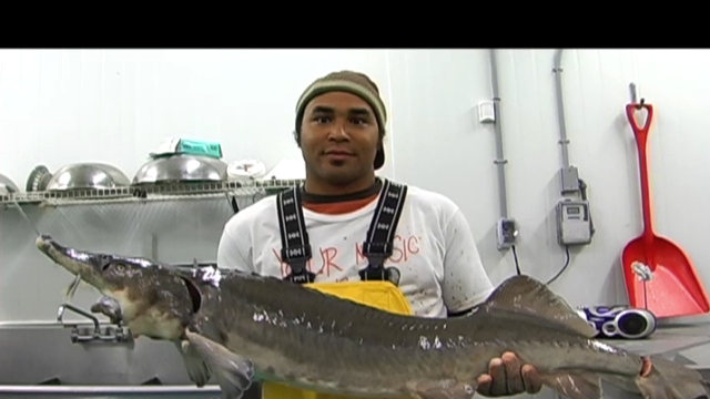 FOOD CURATED: Farming Siberian Sturgeon For More Than Just Caviar