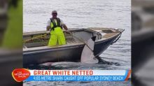 4.65 metre long great white caught at Sydney beach