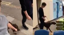 Tom Holland, purest boy in world, found a stray dog and took it to the vet
