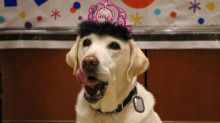 Airport honors service dog with fabulous retirement party after 5 years on the job