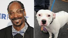 Snoop Dogg Wants to Adopt Dog Named Snoop After Sad Video of the Pup Being Abandoned Goes Viral