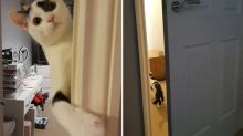 Clever cat reveals how it has been escaping for months, after it learned to open doors