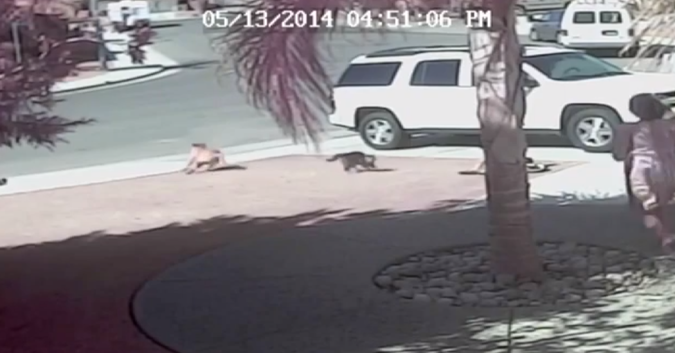 Hero Cat Saves Child From Dog Attack