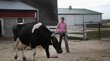 """""""Perdemos dos granjas al día"""": Wisconsin enfrenta una grave crisis láctea"""