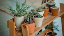 Shop: 5 houseplants to add a bit of nature in your home