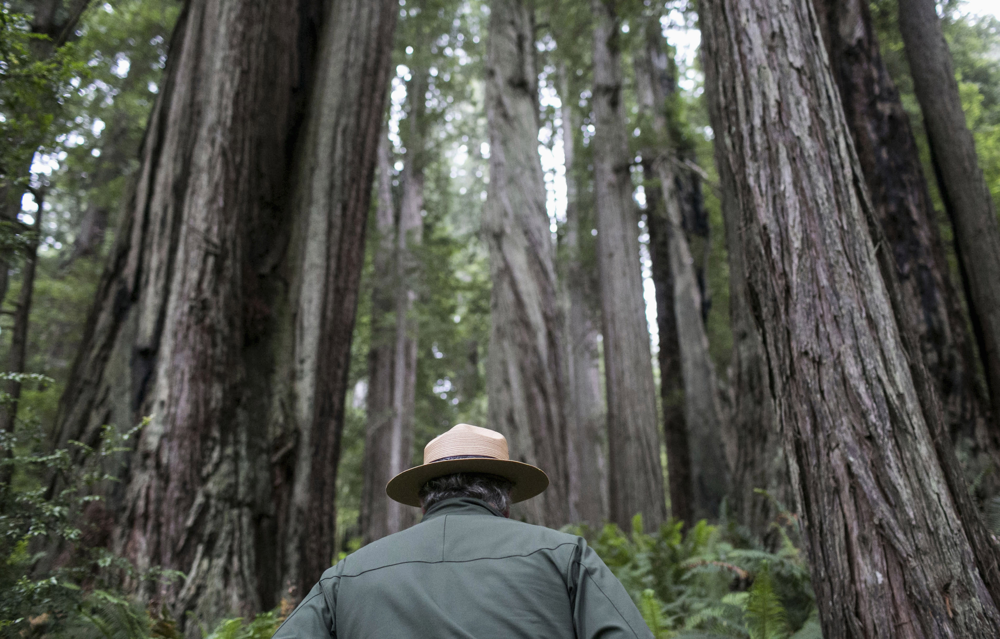 Group Clones Giant Trees To Fight Climate Change