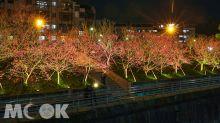 北台灣最美溪畔八重櫻!56盞投光浪漫夜櫻超好拍