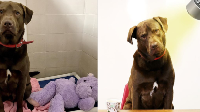 Solía ser un 'buen perro', ahora es el principal sospechoso de un crimen