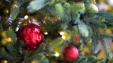 Grüne Weihnachten: Der Keinachtsbaum sucht Unterstützer