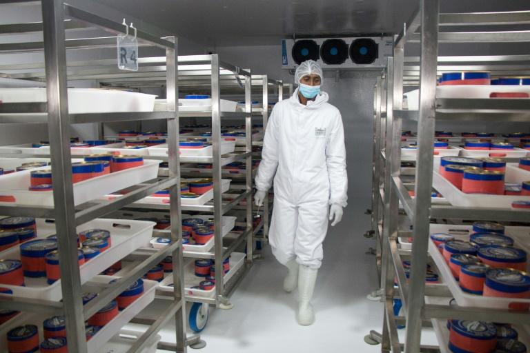 The eggs are kept in a refrigerated room at 0 degrees Celsius (AFP Photo/MAMYRAEL)