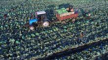 Russian ban on Western food bears fruit in coronavirus era